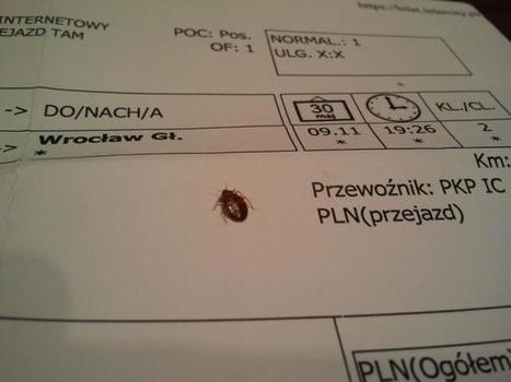kami and the rest of the world: the bed bug accident | Pestek Pest Control | Scoop.it