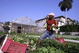 Can Urban Farming Change Our World? | Pinchina Consulting | Vertical Farm - Food Factory | Scoop.it