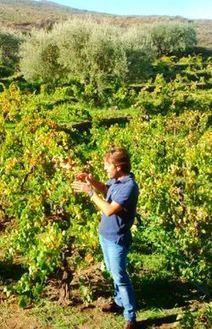 The great Etna landgrab | Articles | JancisRobinson.com | Grande Passione | Scoop.it
