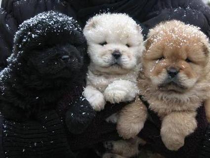 Twitter / planetepics: Winter Puppies http://t.co/u1Xg3qcLpb | Dogs Gone Wild | Scoop.it