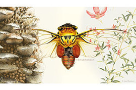 Drawing Nature, Science and Culture: Natural History Illustration   MOOCs and Flipped Learning   Scoop.it
