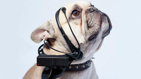 É possível ler a mente dos cachorros?   Science, Technology and Society   Scoop.it
