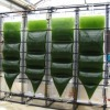 Biofuels From Algae Hold Potential, but Not Ready for Prime Time | UANews | CALS in the News | Scoop.it