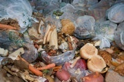 Stadium Reduces Food Waste, Carbon Pollution | Everything You Ever Wanted | Scoop.it