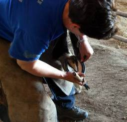 THE COUNTRY LIFE: It's a real hands-on job to be a farrier | Horse Kinetics | Scoop.it
