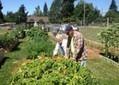 Community garden in Olympia carries blessings | Soundings | The ... | Seedfolks | Scoop.it