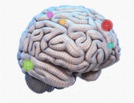 An Interactive Map Of The Brain | Social Neuroscience Advances | Scoop.it