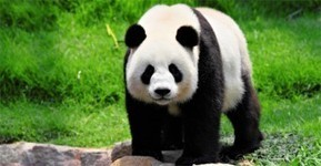 What Is Google Panda 4.0? | Content Marketing & Content Strategy | Scoop.it