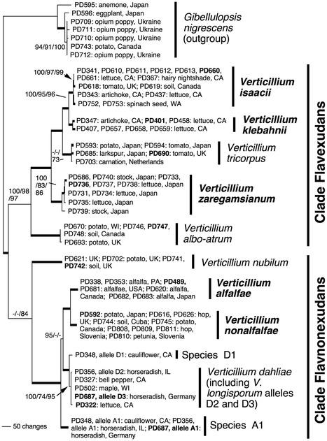PLoS ONE: Phylogenetics and Taxonomy of the Fungal Vascular Wilt Pathogen Verticillium, with the Descriptions of Five New Species | Plant Genomics | Scoop.it