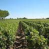 Viticulture et vins