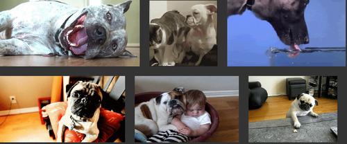 Un nouveau moteur de recherche d'images animées GIF avec Giphy