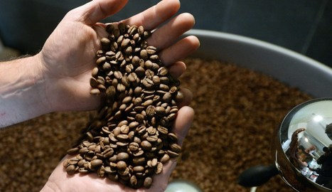 India's coffee exports up 18.15% in April-August | Coffee News | Scoop.it