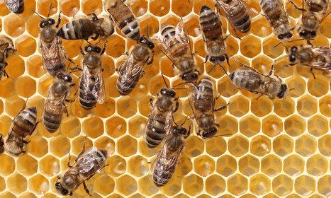 DC Beekeepers Alliance Creates Buzz Around Saving Bees | Digital-News on Scoop.it today | Scoop.it