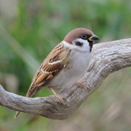 Identifier les oiseaux du jardin et des parcs au printemps et en été | Ornithomedia.com | The Blog's Revue by OlivierSC | Scoop.it