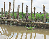 In Mekong Delta, Rice Boom Has Steep Environmental Cost by Mike Ives: Yale Environment 360   Geography Bits   Scoop.it
