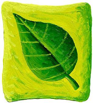 The (Surprising!) Beauty Benefits of Green Tea | Green Curls | Scoop.it
