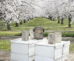 Wild pollinators increase crop fruit set regardless of honey bees | Sustain Our Earth | Scoop.it
