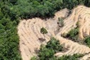 Indigenous communities demand forest rights, blame land grabs for failure to curb deforestation   Nature and Culture   Scoop.it