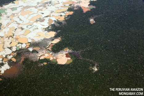 Big Oil's Impact in the Rainforest< | protecting the amazon diversity | Scoop.it