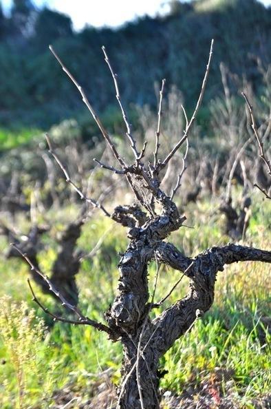 Est-il rentable d'investir dans un vignoble ?  ...   Vignes et vins   Scoop.it