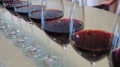 L'Organisation internationale du vin dément une prochaine pénurie mondiale du vin | Agriculture en Dordogne | Scoop.it