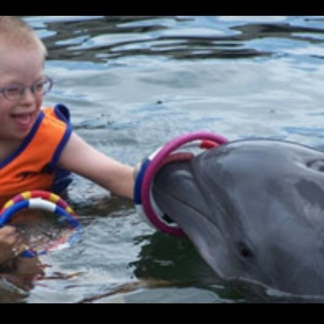 """Dolphin Assisted Therapy, or DAT, is an... 