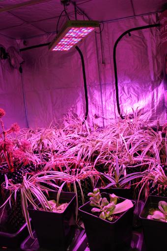 Les enquête de l'EPJT. Cannabis : les growshops cultivent l'hypocrisie | Presse en vrac | Scoop.it
