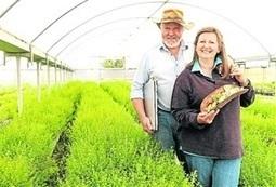 Indigenous pride drives food project - Stock Journal   Australian Plants on the Web   Scoop.it