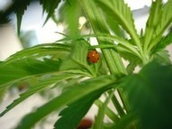 Is Hemp the Perfect Food? | Budget Minded Organics | The Glory of the Garden | Scoop.it