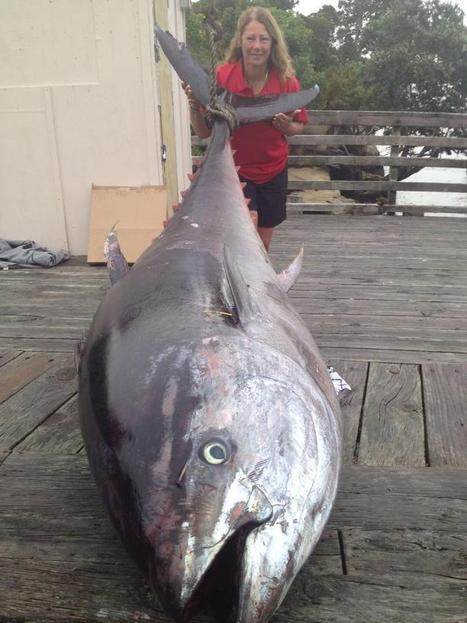 907-Pound Tuna May Set A Record | Global Aquaculture News & Events | Scoop.it