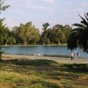 Des marais artificiels pour purifier l'eau des lacs | soleiila | Scoop.it