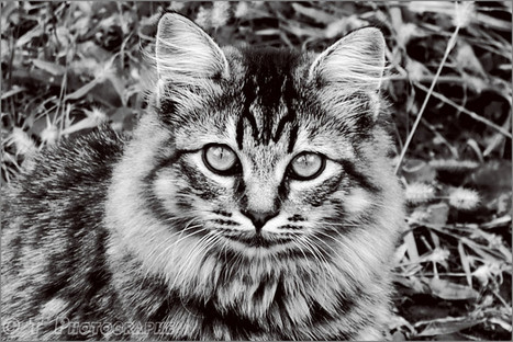 M... MIAOU | The Blog's Revue by OlivierSC | Scoop.it