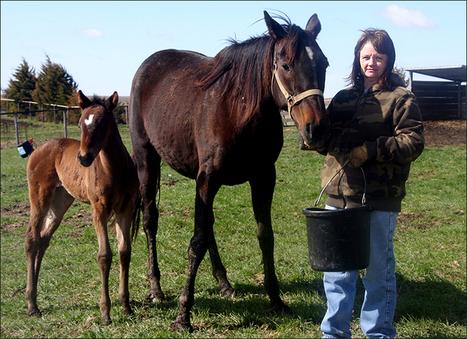 Big business operates under radar - Iowa Farmer Today   Horse Industry News   Scoop.it