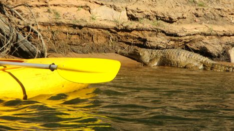 Kayaking with Crocs in Katherine Gorge - Monkeys and Mountains | Adventure Travel - Hang on Tight | Scoop.it