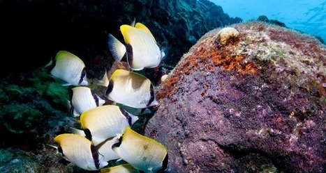 Bequia; The Boundless Reefs That Keep Surprising - | Bequia - All the Best! | Scoop.it