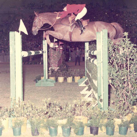 Classic Thoroughbred Show Horses: The Godfather | The Chronicle of the Horse | From the Equine Blogosphere | Scoop.it