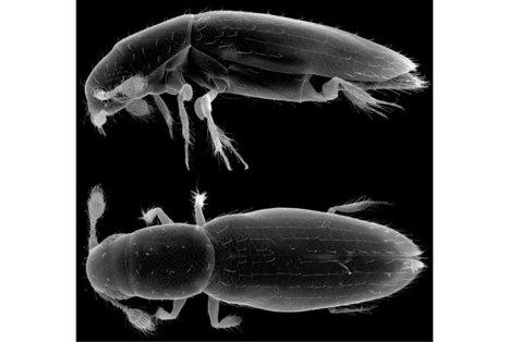 Insecticule | EntomoNews | Scoop.it