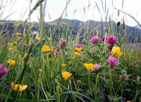 Les prairies fleuries à l'honneur - LaDépêche.fr | Parc régional du haut Languedoc | Scoop.it
