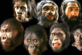 Americans' Creationist Views on Human Origins (Infographic) | Evolution of Man | Scoop.it