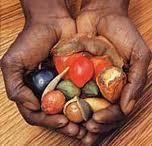 Indigenous (bush foods) added to nutrition panelcalculator | Australian Plants on the Web | Scoop.it