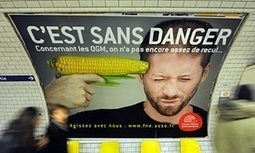 Half of Europe opts out of new GM crop scheme | Environment | The Guardian | GMO GM Articles Research Links | Scoop.it