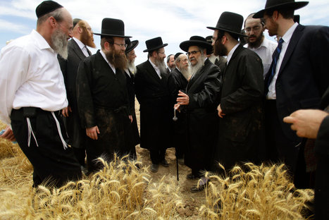 Arizona Is Fertile Ground for New York Matzo | New York (NY) Times | CALS in the News | Scoop.it