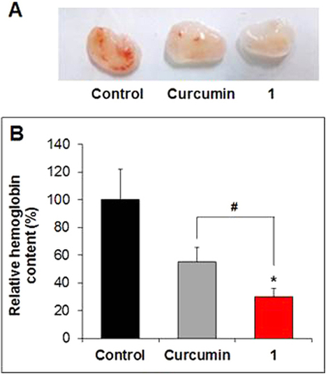 Introduction of Methyl Groups at C2 and C6 Positions Enhances the Antiangiogenesis Activity of Curcumin | PlantBioInnovation | Scoop.it