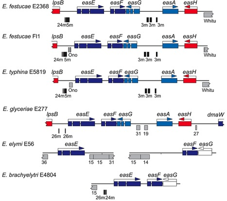 PLOS Genetics: Plant-Symbiotic Fungi as Chemical Engineers: Multi-Genome Analysis of the Clavicipitaceae Reveals Dynamics of Alkaloid Loci (2013) | research on plant resistance gene for disease | Scoop.it