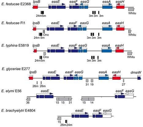 PLOS Genetics: Plant-Symbiotic Fungi as Chemical Engineers: Multi-Genome Analysis of the Clavicipitaceae Reveals Dynamics of Alkaloid Loci (2013) | Plant Pathogenomics | Scoop.it
