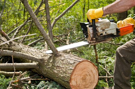 How the Flow of Carbon Through Trees to Underground Ecosystems Influences the Climate Change » CJ S Tree Service of Omaha | Tree Service | Scoop.it