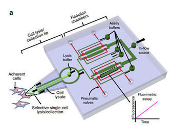 Microfluidics and Single Cells | Cell Culture Technologies | Scoop.it