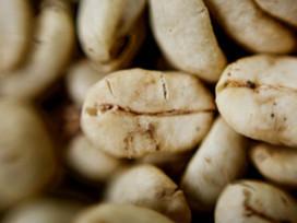 25% de cosecha anual de café en Perú se perderá por plaga de la roya   Perú   Scoop.it