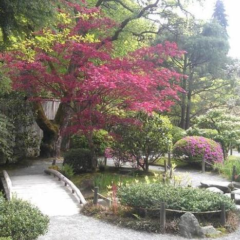 A check-in at Japanese Gardens | Japanese Gardens | Scoop.it