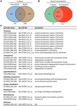 PLOS ONE: Heart of Endosymbioses: Transcriptomics Reveals a Conserved Genetic Program among Arbuscular Mycorrhizal, Actinorhizal and Legume-Rhizobial Symbioses | Population genomics of symbiosis | Scoop.it